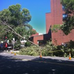 (Gazette Photo by Rebeca Oliveira) A treefall in front of the Farnsworth House at 90 South St. blocked the sidewalk, a bus stop and a bike lane.